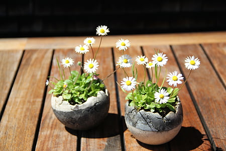 two daisy flowers on table