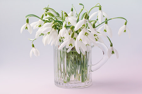 white petaled flowers in clear glass pitcher