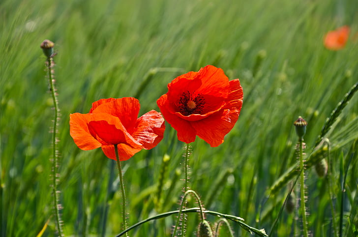 photo of two red and orange petaled flowers