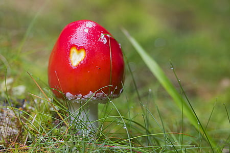 red and white plant on grass field