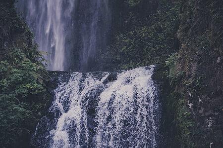 waterfalls near trees