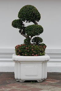 green bonsai plant on white pot