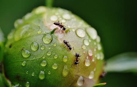 shallow focus photo of three black ants