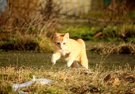 orange tabby cat running on grass