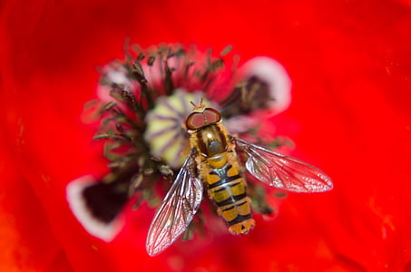 close up photo of brown hoverfly perched on flower