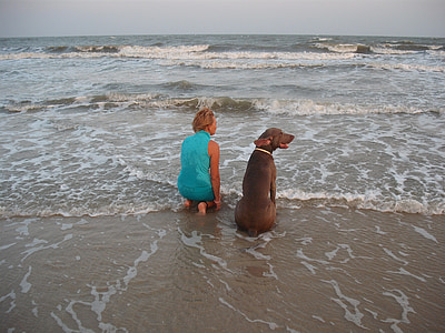 adult chocolate Labrador retriever sitting near the woman on the seashore