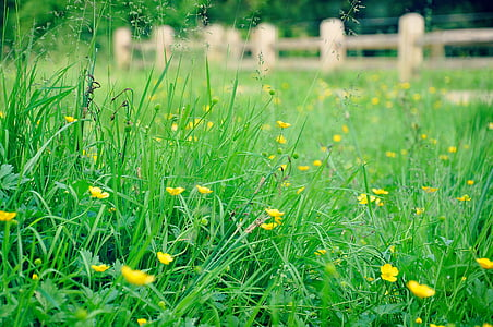 yellow flower meadow beside brown wooden fence