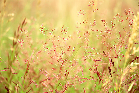 selective focus photography of brown grasses