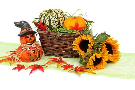 pumpkin and sunflower near basket
