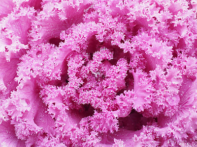 macro photography of pink substance