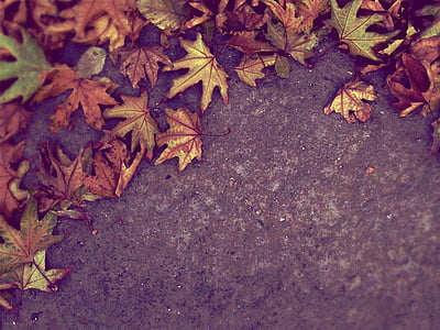 closeup photo of maple leaves on ground