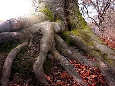 brown tree on brown soil