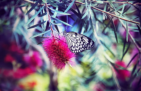 paper kite butterfly perching on pink flower in close-up photography