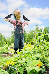 scarecrow near green plants during daytime