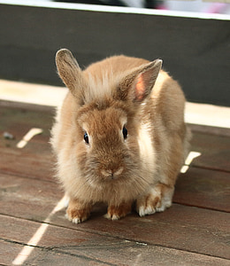 brown rabbit on table