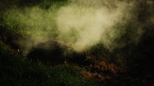 grass lawn with smoke
