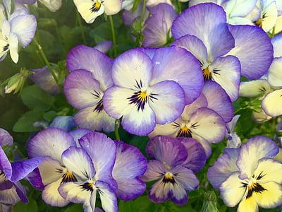purple flower s