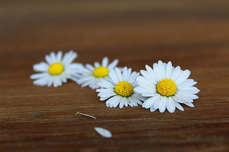 selective focus photography of white-and-yellow flowers
