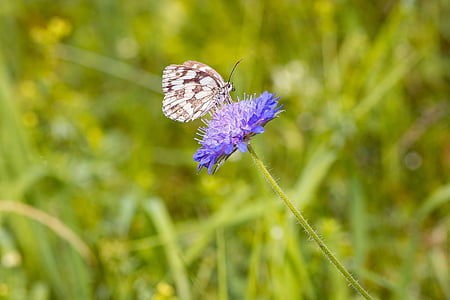 white and black butterfly on purple flower during daytime