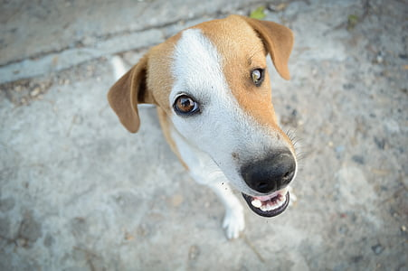 short-coat white and brown dog in close-up photography