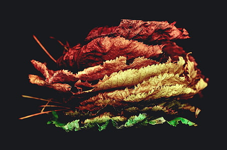 assorted stages leaves