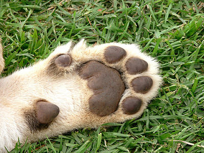dog paw on grass