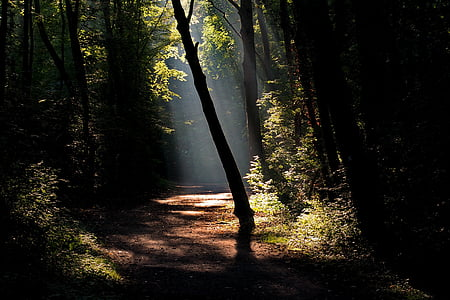 pathway in the forest during day