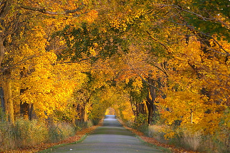 pathway between yellow leaf trees