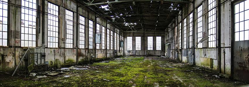 green moss inside room