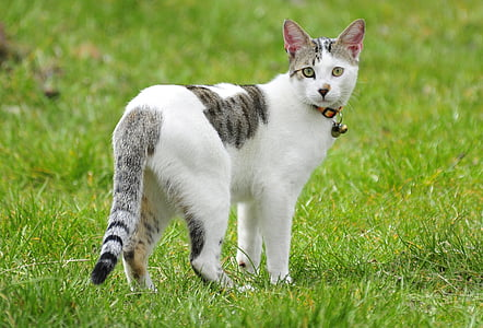 white and black cat wearing collar
