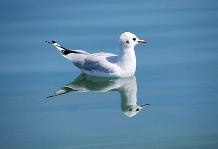 seagull on body water