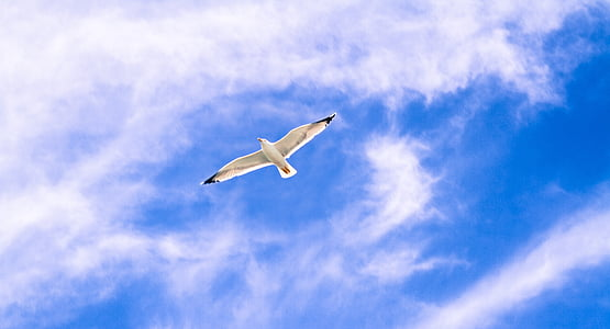 white flying bird under blue sky and white clouds