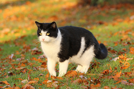 black and white cat on grass field