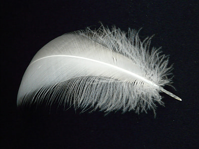 closeup photography of white feather with black background
