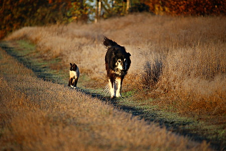 medium-coated black and white dog walking beside short-fur brown and white at daytime