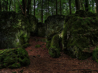 rocks covered by mossy