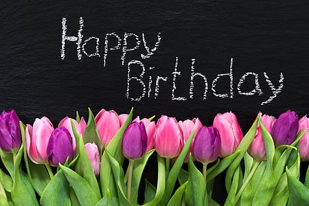 pink and purple tulips happy birthday illustration