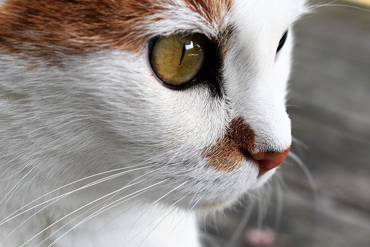 portrait photo of cat