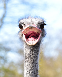 close-up photo of of ostrich