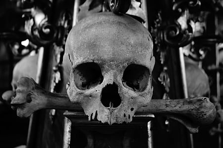 grayscale photo of skull
