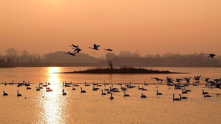 birds on body of water during golden hour