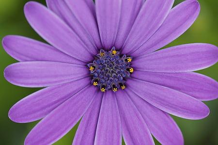 purple petaled flower closeup photography