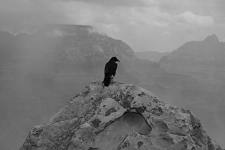 lack raven on gray mountain peak