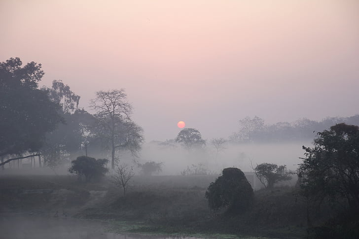 foggy field with green leafed trees during golden hour