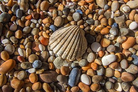 closeup photo of seashell surrounded with stones