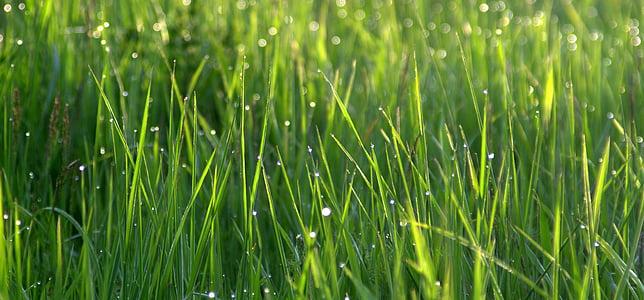grass plains