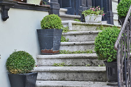 green leaf plant on gray concrete stair
