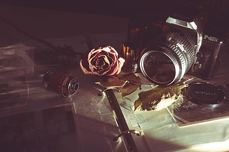 red rose beside a black DSLR camera on an opened photo album closeup photography
