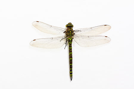 green dragonfly perched on white surface