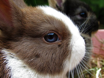 shallow focus photography of brown and white rabbit